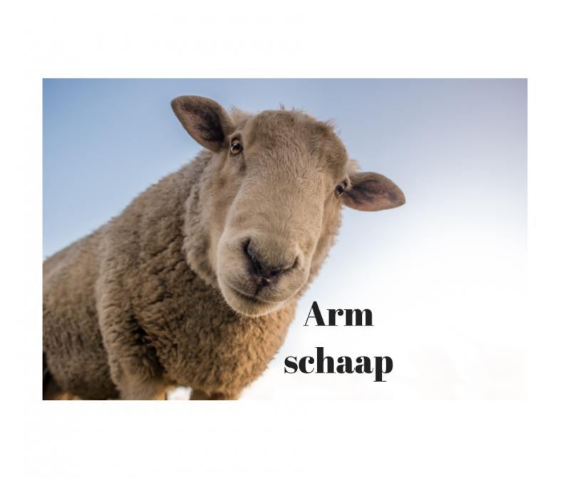 Arm schaap