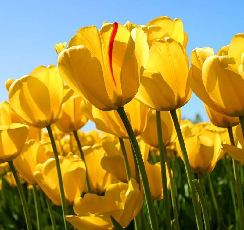Online bijeenkomst voor mantelzorgers op 12 mei